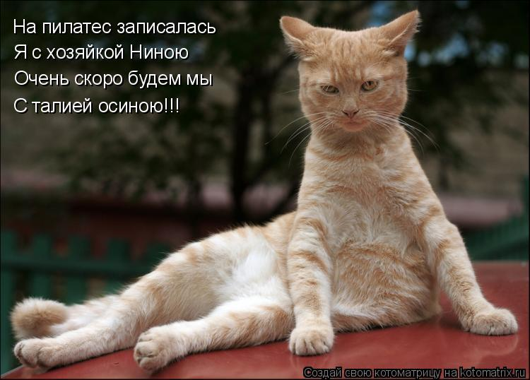 Котоматрица: На пилатес записалась Я с хозяйкой Ниною Очень скоро будем мы С талией осиною!!!