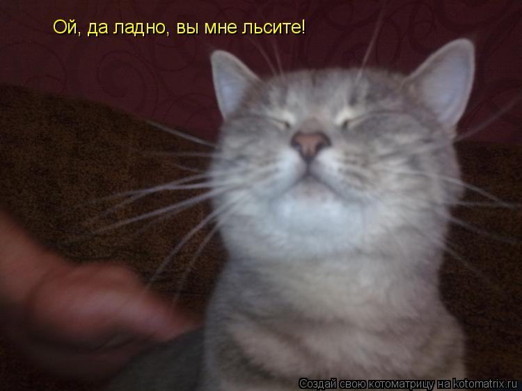 Котоматрица: Ой, да ладно, вы мне льсите!