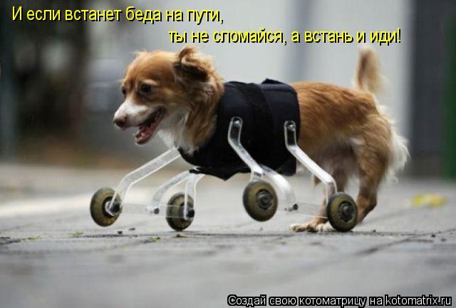 Котоматрица: И если встанет беда на пути, ты не сломайся, а встань и иди!