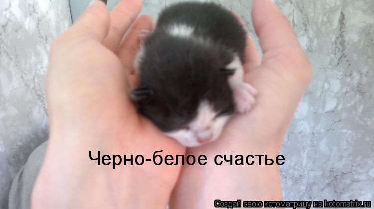 Котоматрица: Черно-белое счастье
