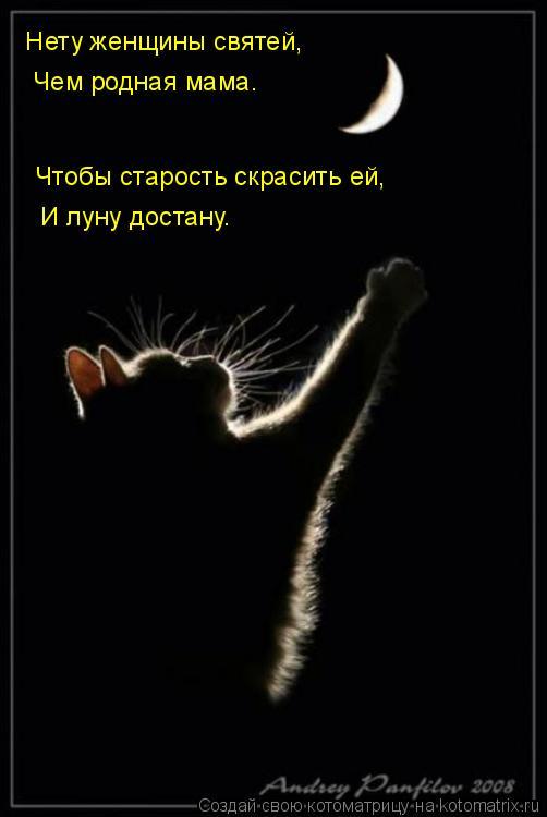 Котоматрица: Нету женщины святей,  Чем родная мама.  Чтобы старость скрасить ей,  И луну достану.