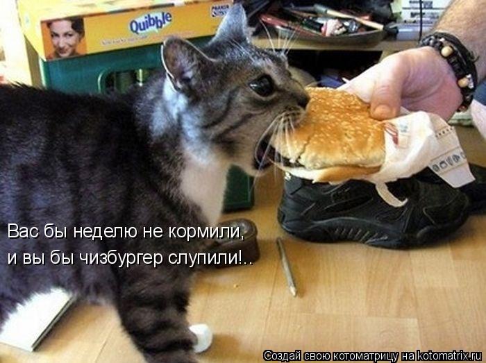 Котоматрица: Вас бы неделю не кормили, и вы бы чизбургер слупили!..