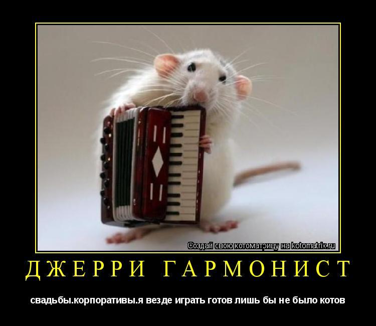 Котоматрица: джерри гармонист свадьбы.корпоративы.я везде играть готов лишь бы не было котов