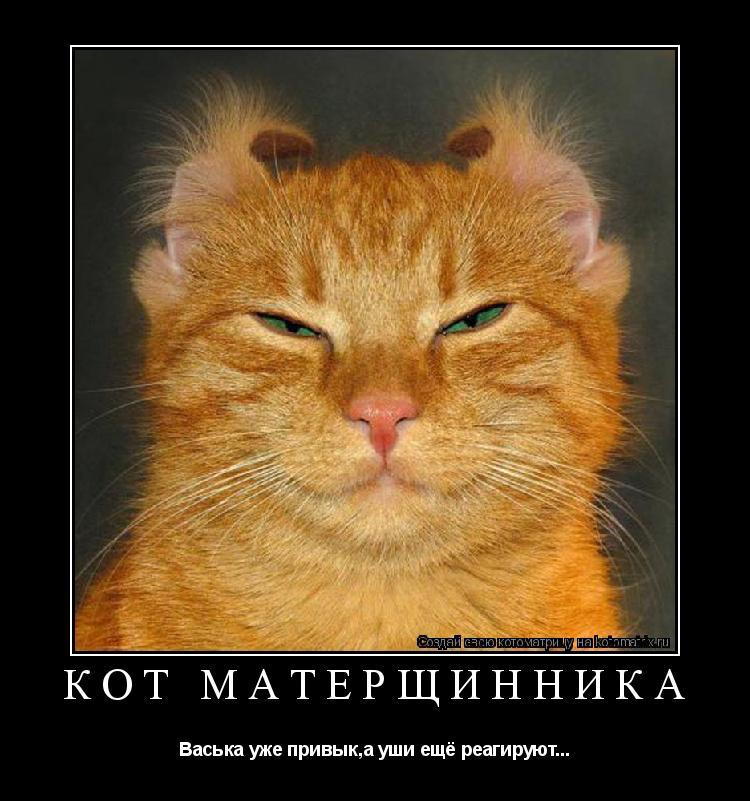 Котоматрица: кот матерщинника Васька уже привык,а уши ещё реагируют...