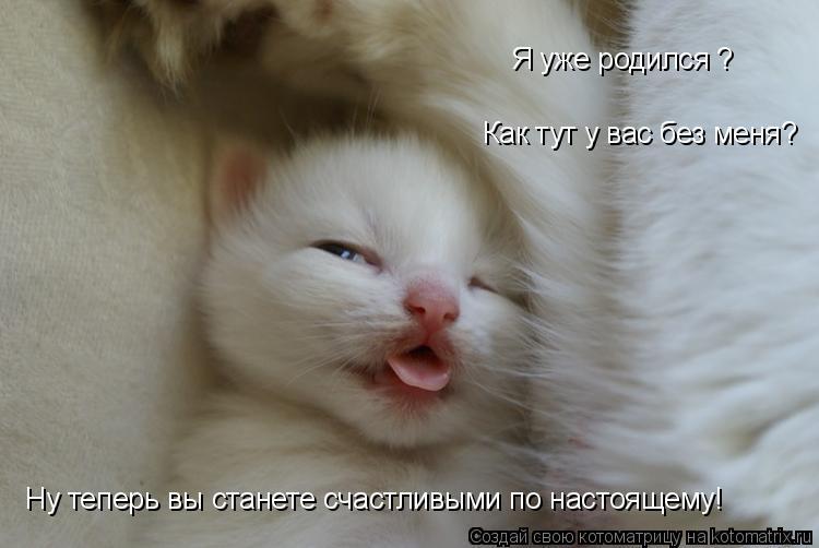 Котоматрица: Я уже родился ? Как тут у вас без меня? Ну теперь вы станете счастливыми по настоящему!