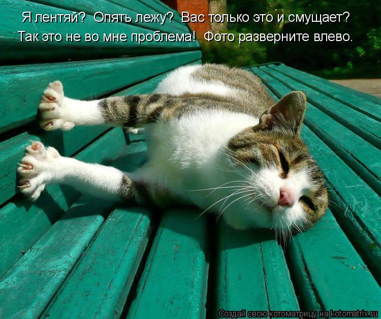 Котоматрица: Я лентяй?  Опять лежу?  Вас только это и смущает? Так это не во мне проблема!  Фото разверните влево.