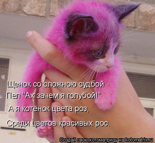 """Котоматрица: Щенок со сложною судбой Пел """"Ах зачем я голубой!"""" А я котёнок цвета роз, Среди цветов красивых рос."""