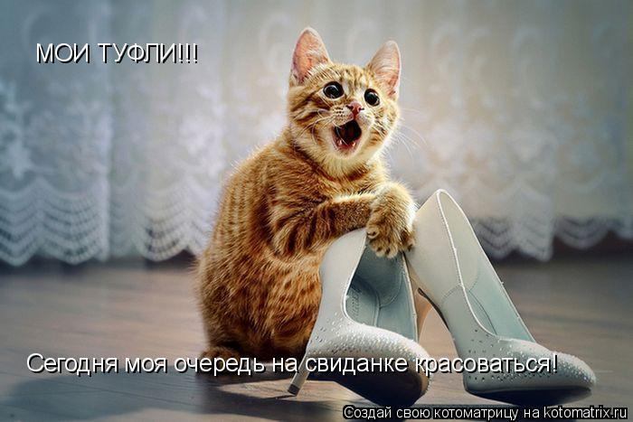 Котоматрица: МОИ ТУФЛИ!!! Сегодня моя очередь на свиданке красоваться!
