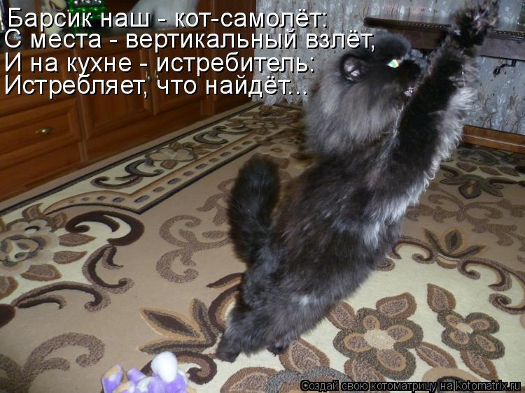 Котоматрица - Барсик наш - кот-самолёт: С места - вертикальный взлёт, И на кухне - и