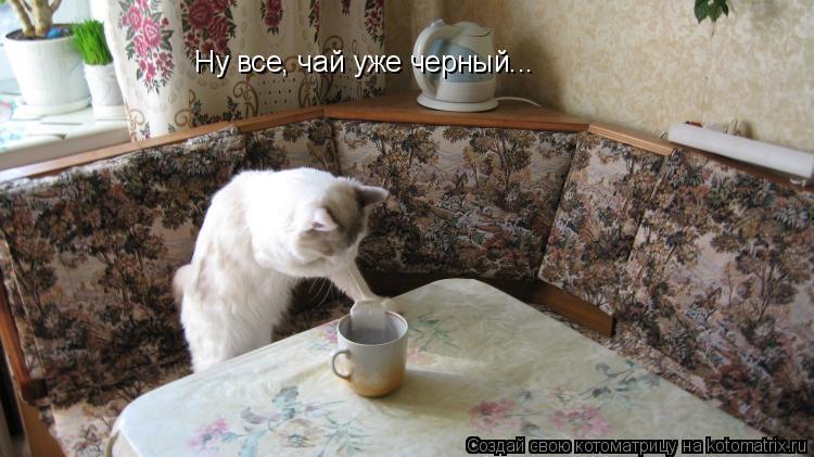Котоматрица: Ну все, чай уже черный...