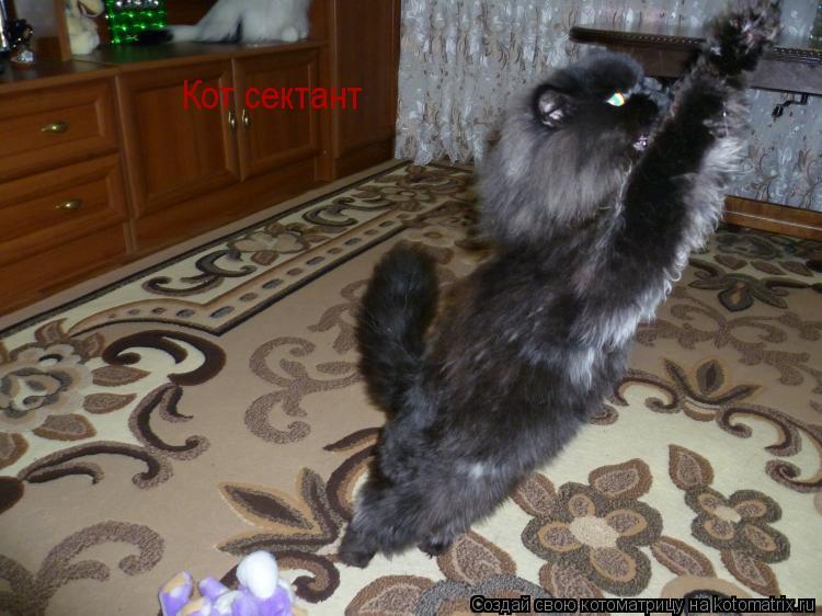 Котоматрица: Кот сектант