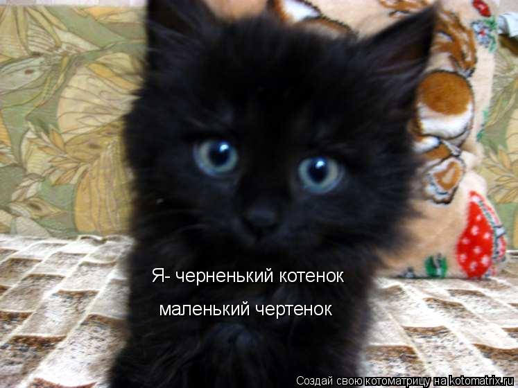 Котоматрица: Я- черненький котенок маленький чертенок