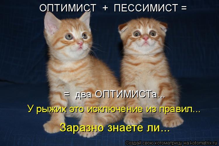 Котоматрица: ОПТИМИСТ  +  ПЕССИМИСТ =   =  два ОПТИМИСТа...   У рыжих это исключение из правил... Заразно знаете ли...