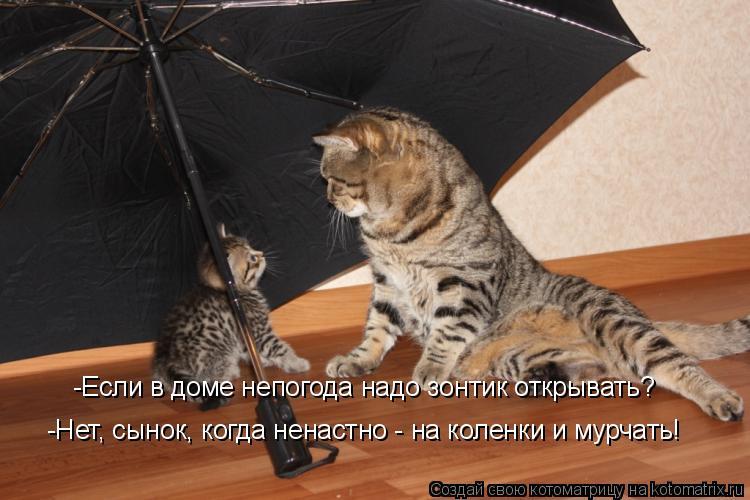 Котоматрица: -Если в доме непогода надо зонтик открывать? -Нет, сынок, когда ненастно - на коленки и мурчать!