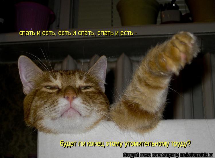 Котоматрица: спать и есть, есть и спать, спать и есть -  будет ли конец этому утомительному труду?