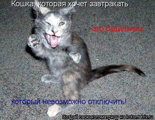 Котоматрица: Кошка, которая хочет завтракать  - это будильник,  который невозможно отключить!