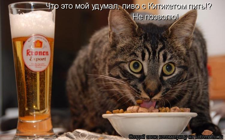 Котоматрица: Что это мой удумал, пиво с Китикетом пить!? Не позволю!