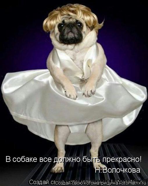 Котоматрица: В собаке все должно быть прекрасно! Н.Волочкова