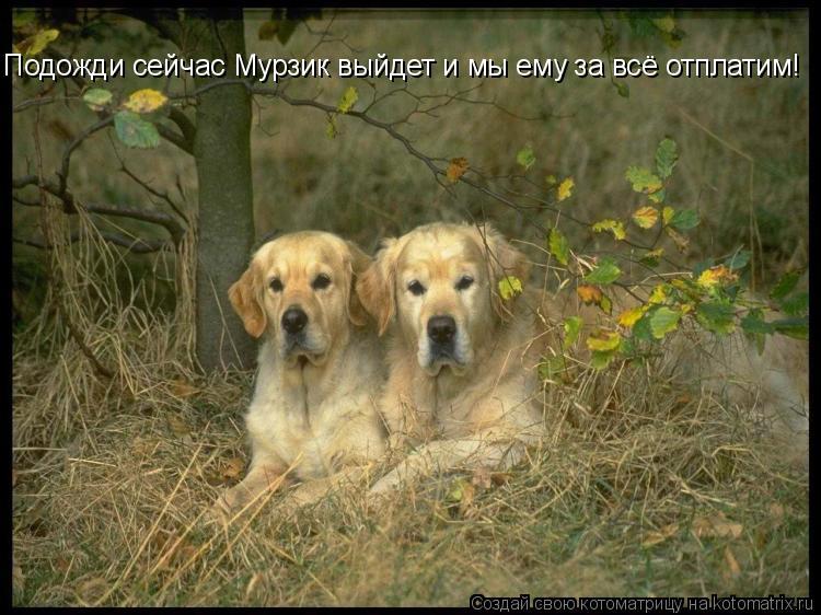 Картинки, Собака, скачать красивые обои с собаками для рабочего стола