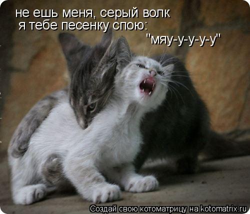 "Котоматрица: не ешь меня, серый волк я тебе песенку спою: ""мяу-у-у-у-у"""