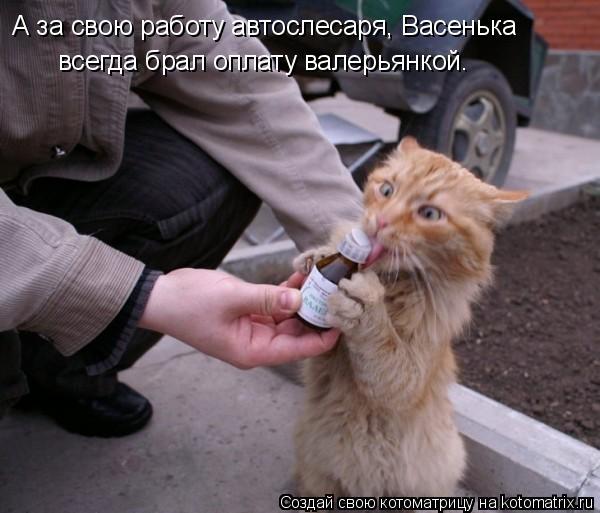 Котоматрица: А за свою работу автослесаря, Васенька всегда брал оплату валерьянкой.