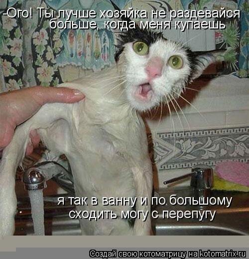 Котоматрица: -Ого! Ты лучше хозяйка не раздевайся больше, когда меня купаешь  я так в ванну и по большому   сходить могу с перепугу