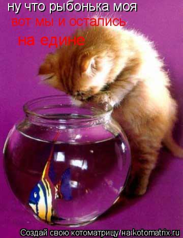 Котоматрица: ну что рыбонька моя  вот мы и остались на едине