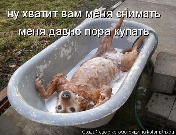 Котоматрица - ну хватит вам меня снимать меня давно пора купать
