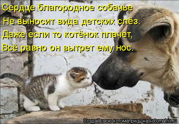 Сердце благородное собачье Не выносит вида детских слёз. Даже если то котёнок плачет, Всё равно он вытрет ему нос.