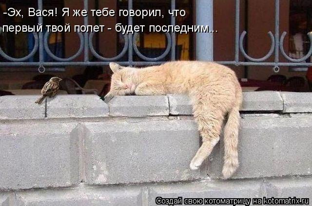 Котоматрица: -Эх, Вася! Я же тебе говорил, что первый твой полет - будет последним...