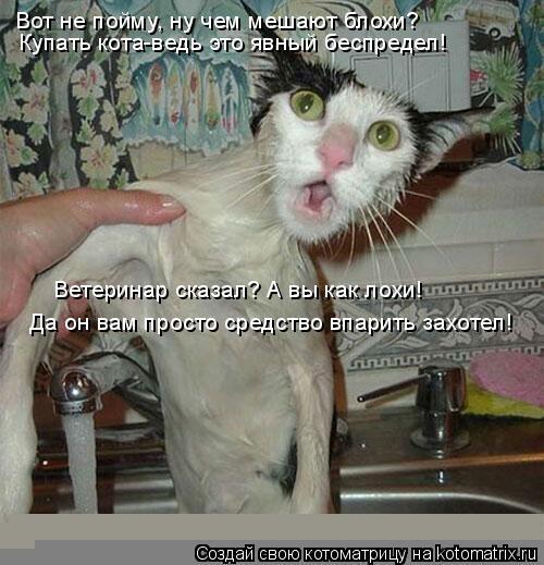 Котоматрица: Вот не пойму, ну чем мешают блохи? Купать кота-ведь это явный беспредел! Ветеринар сказал? А вы как лохи! Да он вам просто средство впарить за