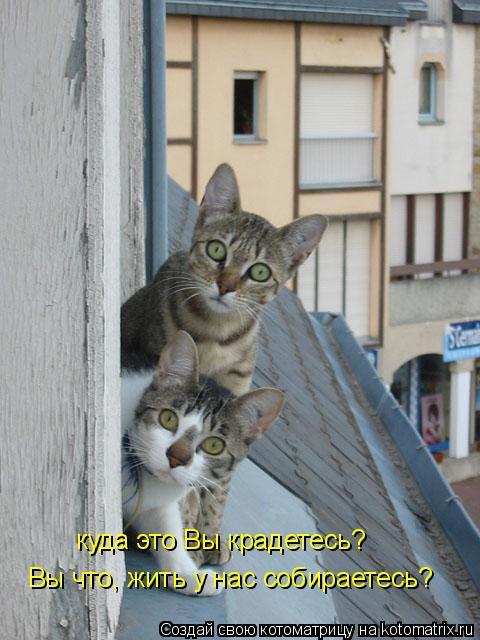 Котоматрица: Вы что, жить у нас собираетесь? куда это Вы крадетесь?