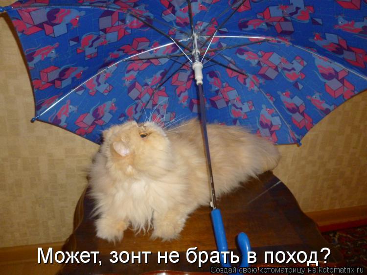 Котоматрица: Может, зонт не брать в поход?
