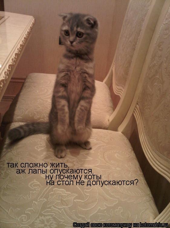 Котоматрица: так сложно жить, аж лапы опускаются, ну почему коты на стол не допускаются?