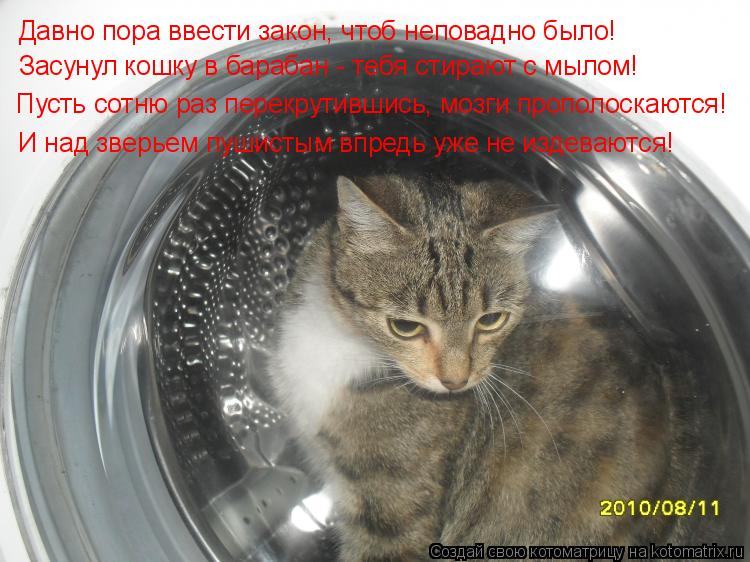 Котоматрица: Давно пора ввести закон, чтоб неповадно было! Засунул кошку в барабан - тебя стирают с мылом! Пусть сотню раз перекрутившись, мозги прополос