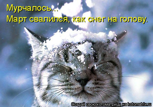 Котоматрица: Мурчалось... Март свалился, как снег на голову.