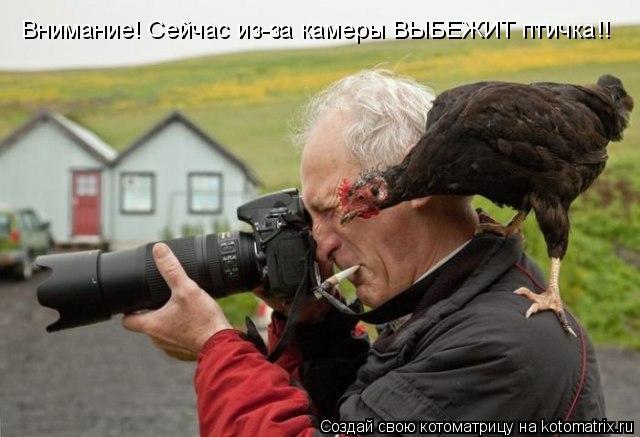 Котоматрица: Внимание! Сейчас из-за камеры ВЫБЕЖИТ птичка!!