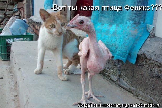 Котоматрица: -Вот ты какая птица Феникс???
