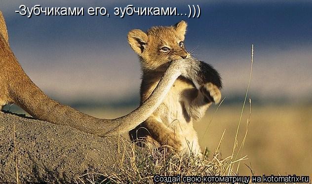 Котоматрица: -Зубчиками его, зубчиками...)))