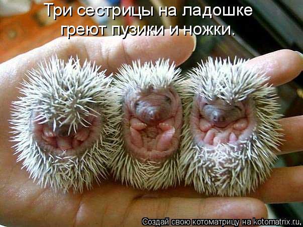 Котоматрица: Три сестрицы на ладошке греют пузики и ножки.