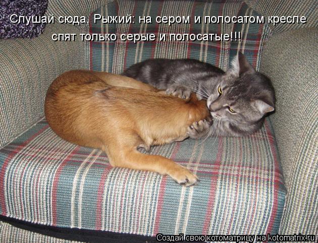 Котоматрица: спят только серые и полосатые!!! Слушай сюда, Рыжий: на сером и полосатом кресле