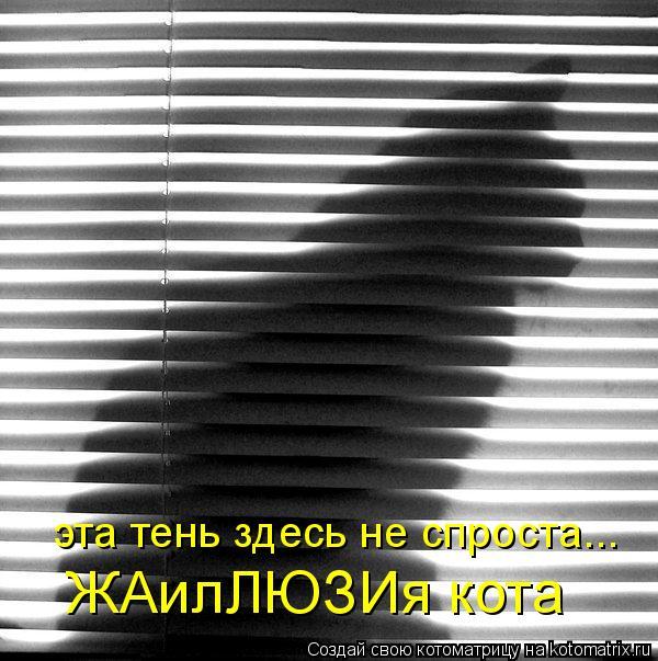 Котоматрица - ЖАилЛЮЗИя кота эта тень здесь не спроста...