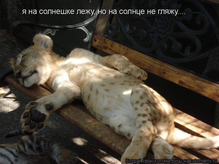Котоматрица: я на солнешке лежу, но на солнце не гляжу....