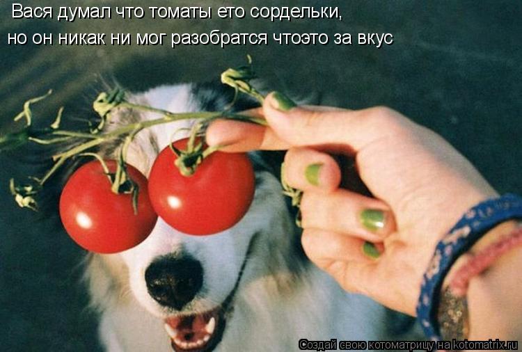 Котоматрица: Вася думал что томаты ето сордельки, но он никак ни мог разобратся чтоэто за вкус