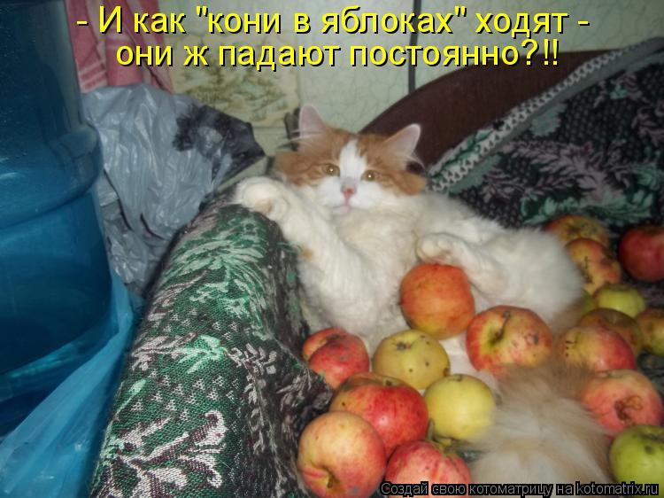 """Котоматрица - - И как """"кони в яблоках"""" ходят -  они ж падают постоянно?!!"""