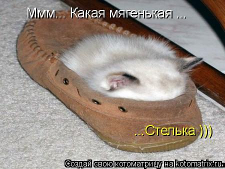 Котоматрица: Ммм... Какая мягенькая ... ...Стелька )))