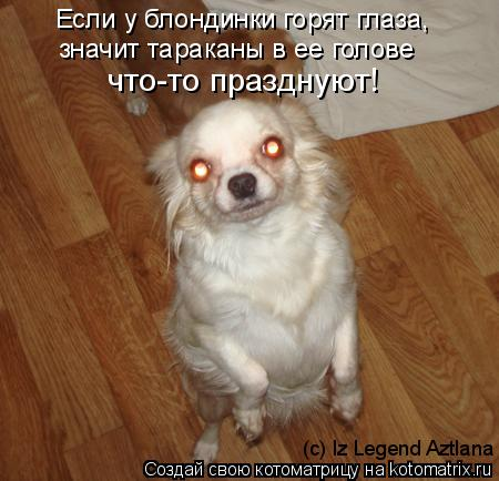 Котоматрица: Если у блондинки горят глаза, значит тараканы в ее голове  что-то празднуют! (c) Iz Legend Aztlana
