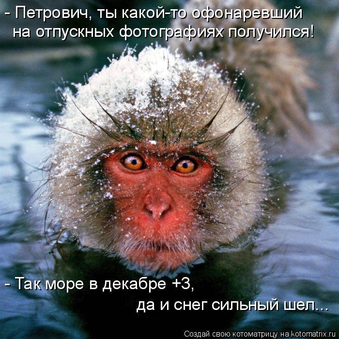 Котоматрица: - Петрович, ты какой-то офонаревший  на отпускных фотографиях получился! - Так море в декабре +3,  да и снег сильный шел...