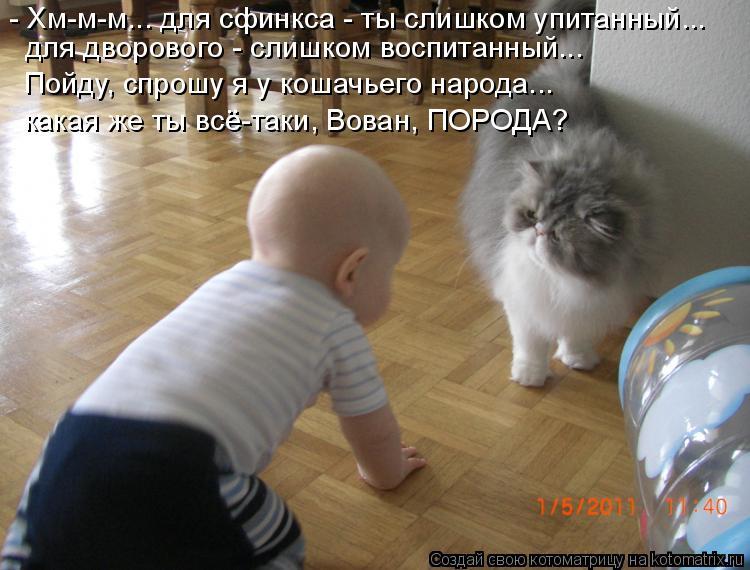 Котоматрица: - Хм-м-м... для сфинкса - ты слишком упитанный... для дворового - слишком воспитанный... Пойду, спрошу я у кошачьего народа... какая же ты всё-таки,