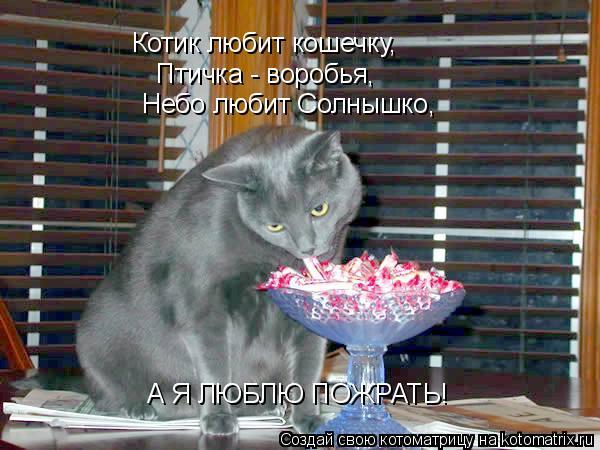 Котоматрица: Котик любит кошечку, Птичка - воробья, Небо любит ...